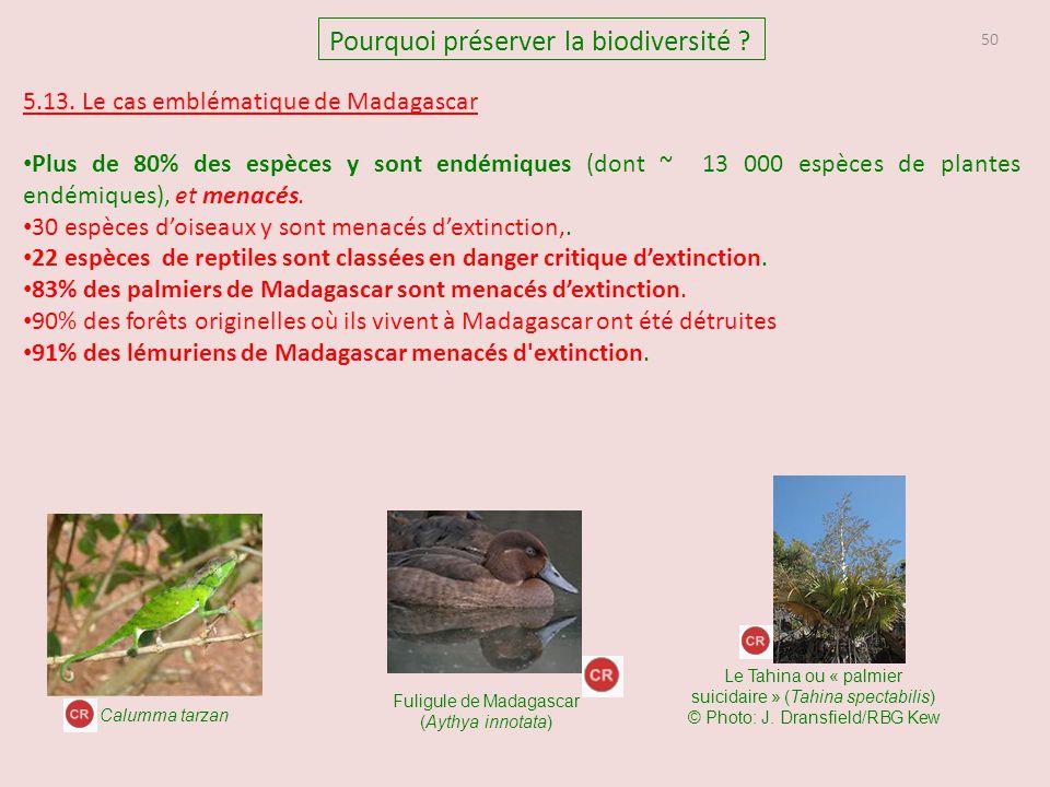 Fuligule de Madagascar