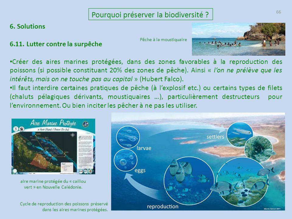 aire marine protégée du « caillou vert » en Nouvelle Calédonie.