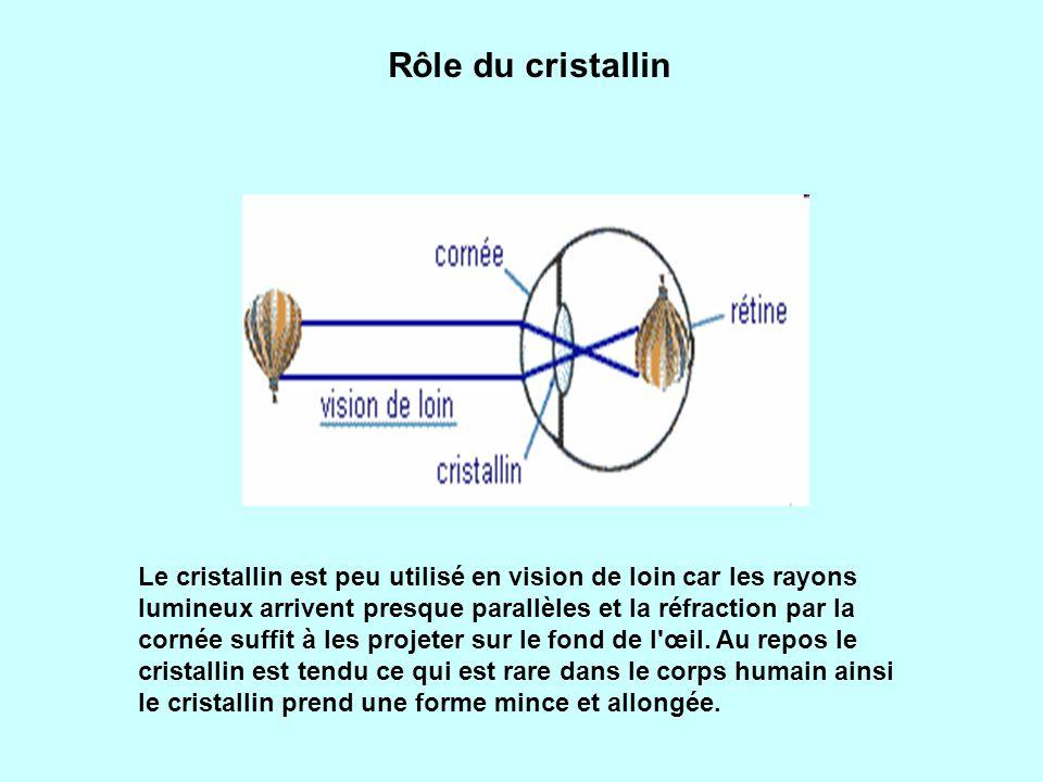 Rôle du cristallin