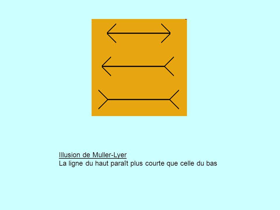 Illusion de Muller-Lyer La ligne du haut paraît plus courte que celle du bas
