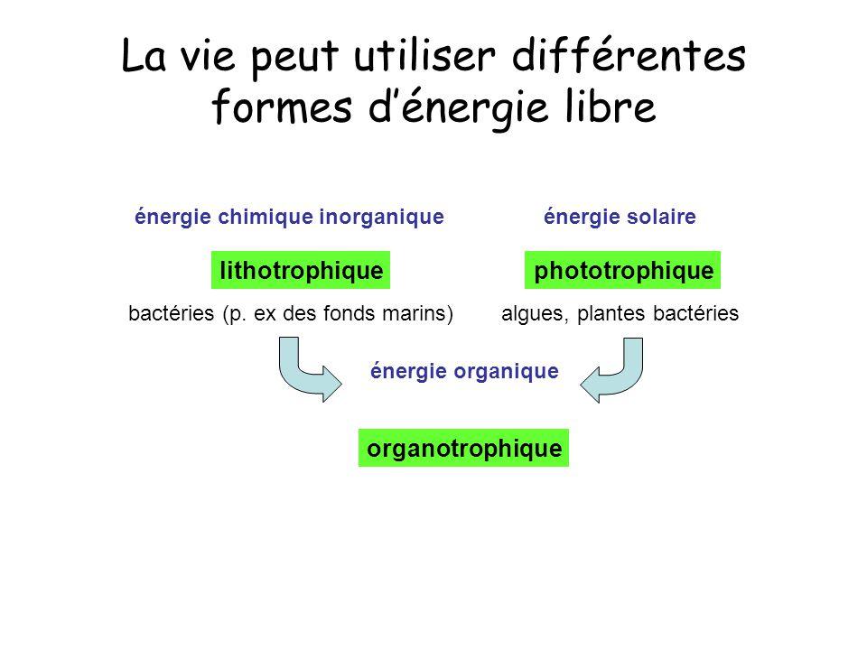 La vie peut utiliser différentes formes d'énergie libre