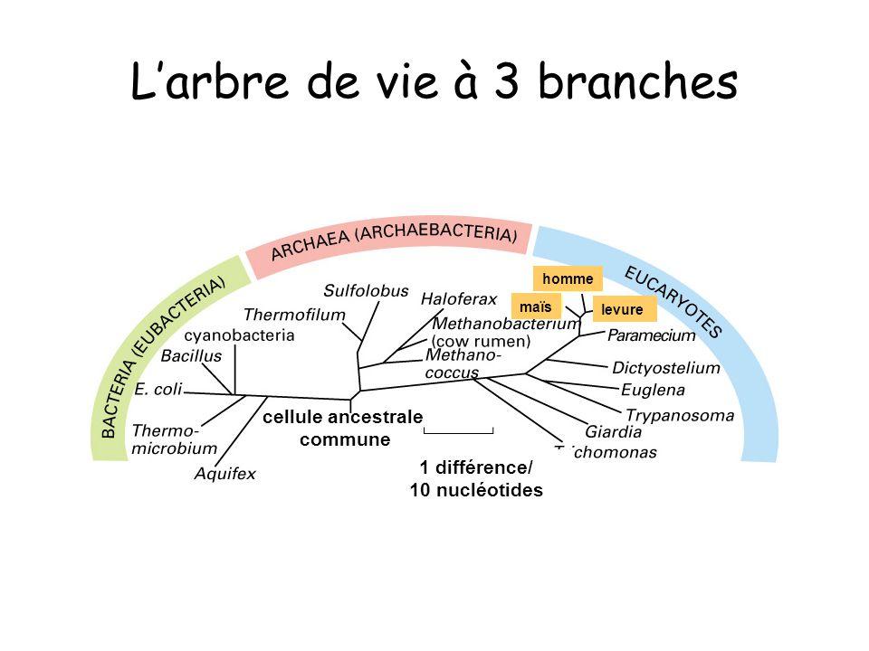 L'arbre de vie à 3 branches