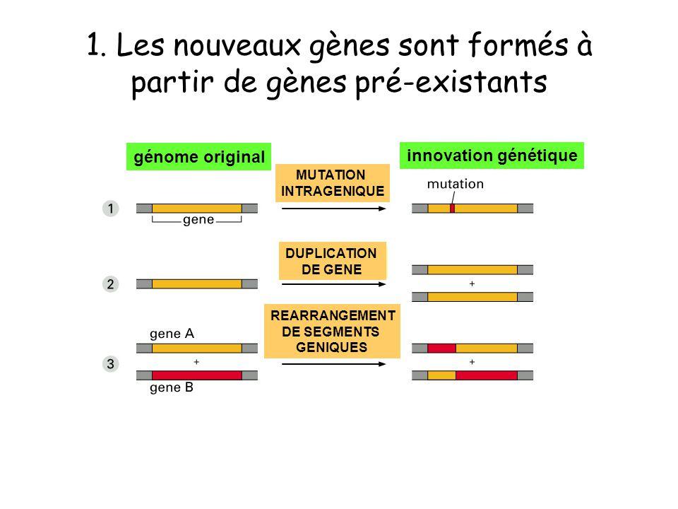 1. Les nouveaux gènes sont formés à partir de gènes pré-existants