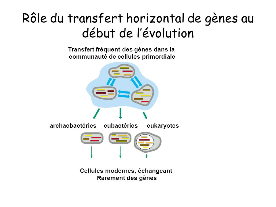 Rôle du transfert horizontal de gènes au début de l'évolution