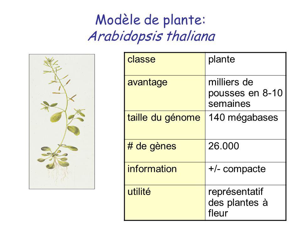 Modèle de plante: Arabidopsis thaliana