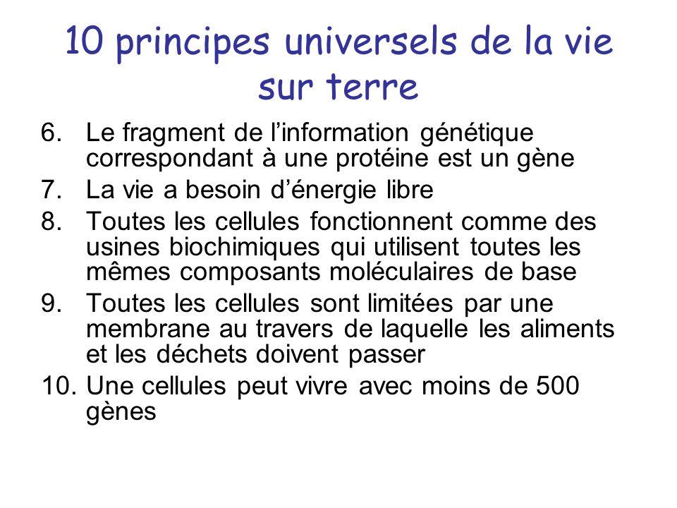 10 principes universels de la vie sur terre