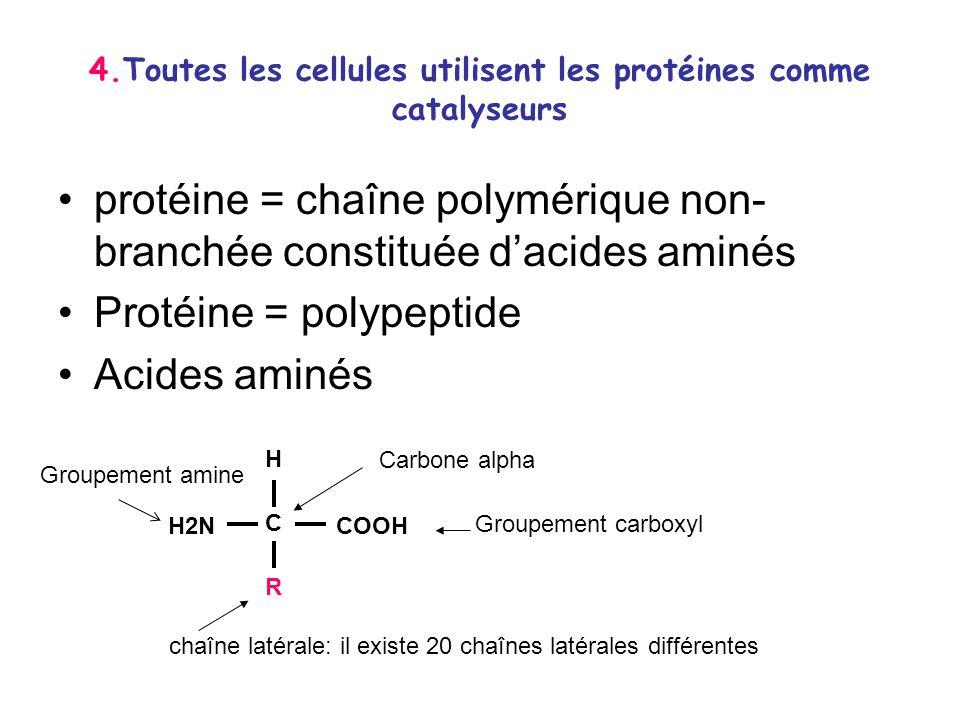 4.Toutes les cellules utilisent les protéines comme catalyseurs