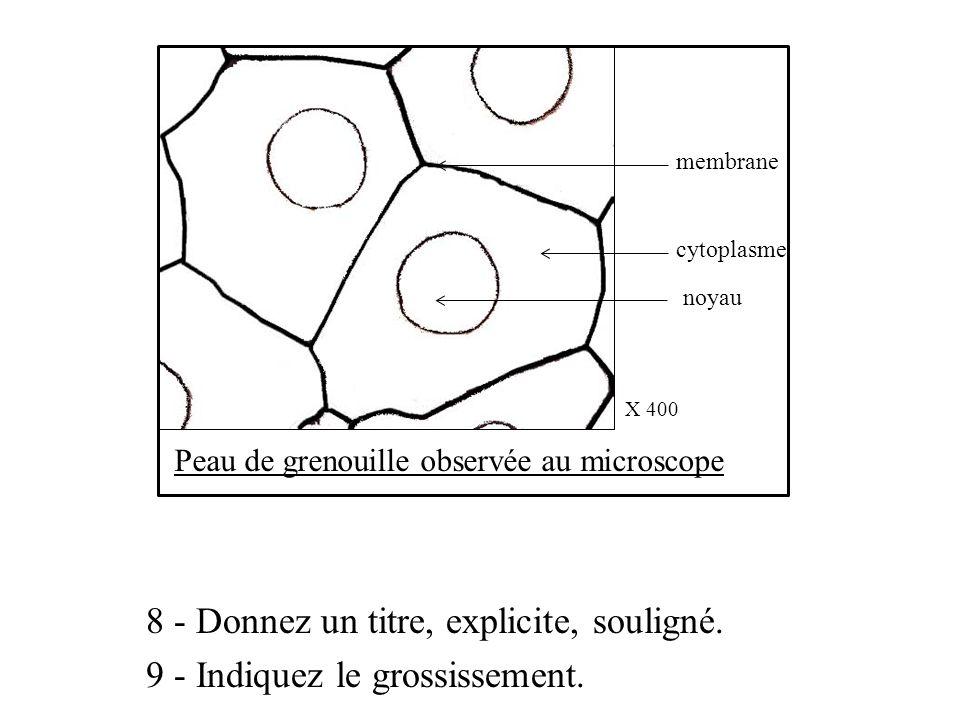 Peau de grenouille observée au microscope