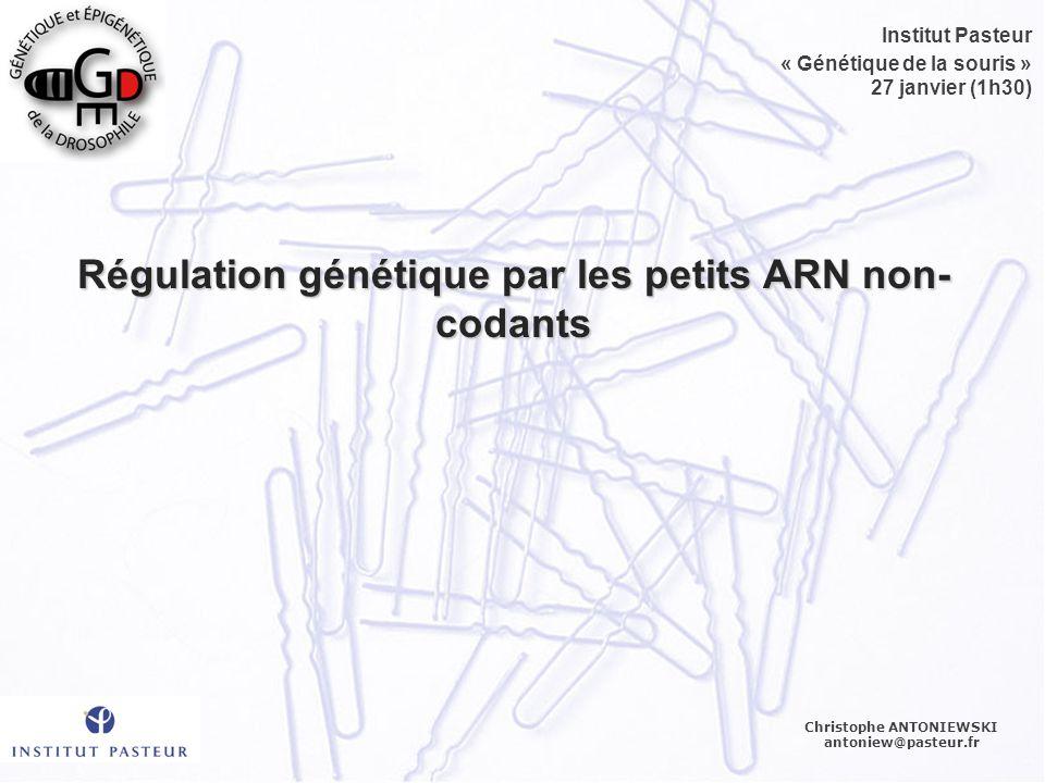 Régulation génétique par les petits ARN non-codants