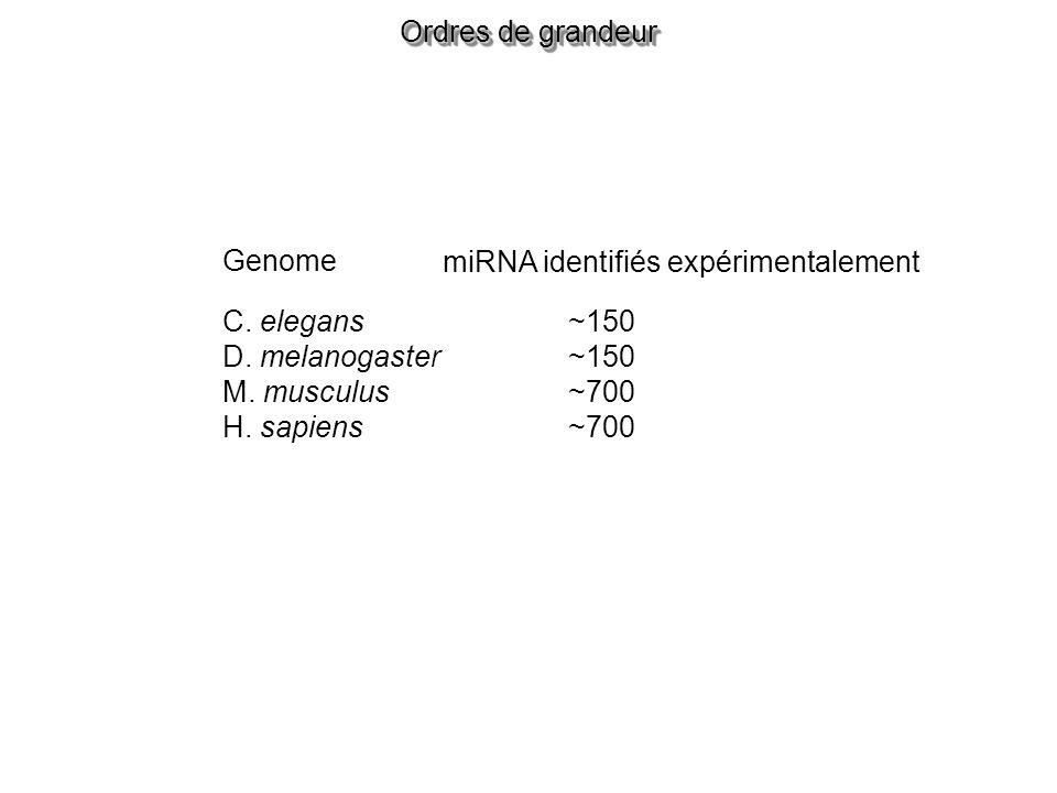 Ordres de grandeur Genome. miRNA identifiés expérimentalement. C. elegans. D. melanogaster. M. musculus.