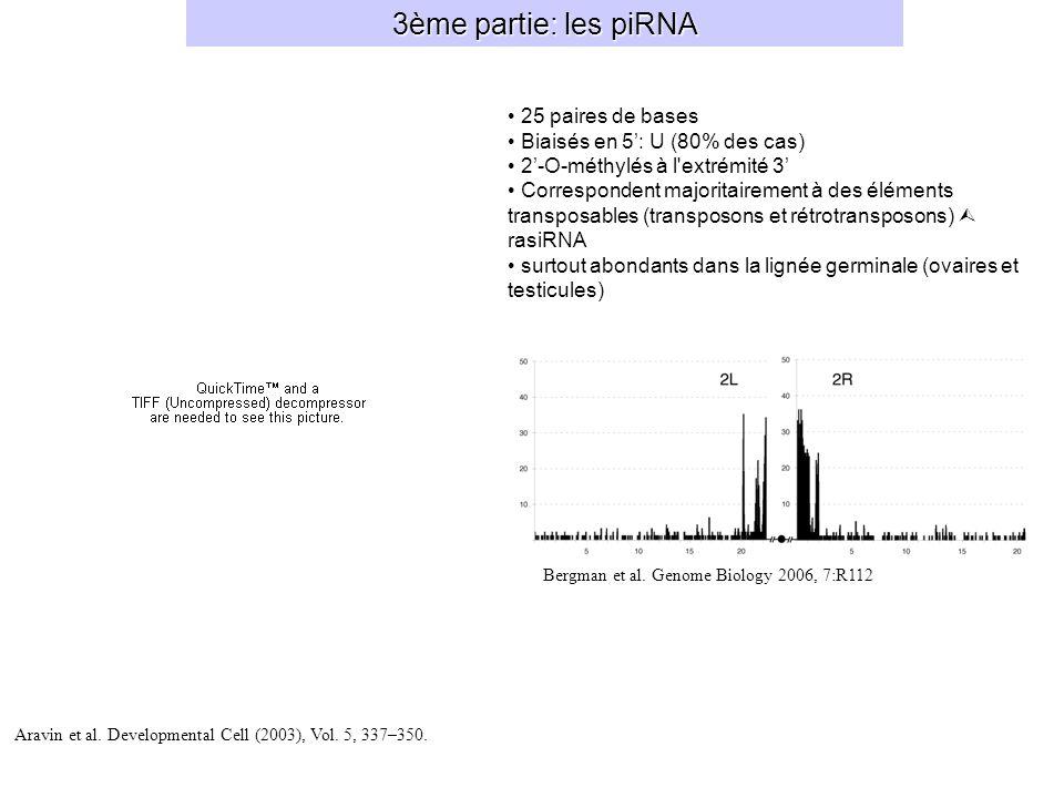 3ème partie: les piRNA 25 paires de bases