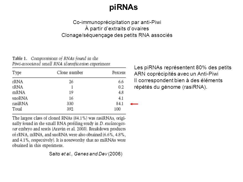 piRNAs Co-immunoprécipitation par anti-Piwi