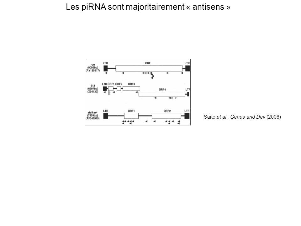 Les piRNA sont majoritairement « antisens »