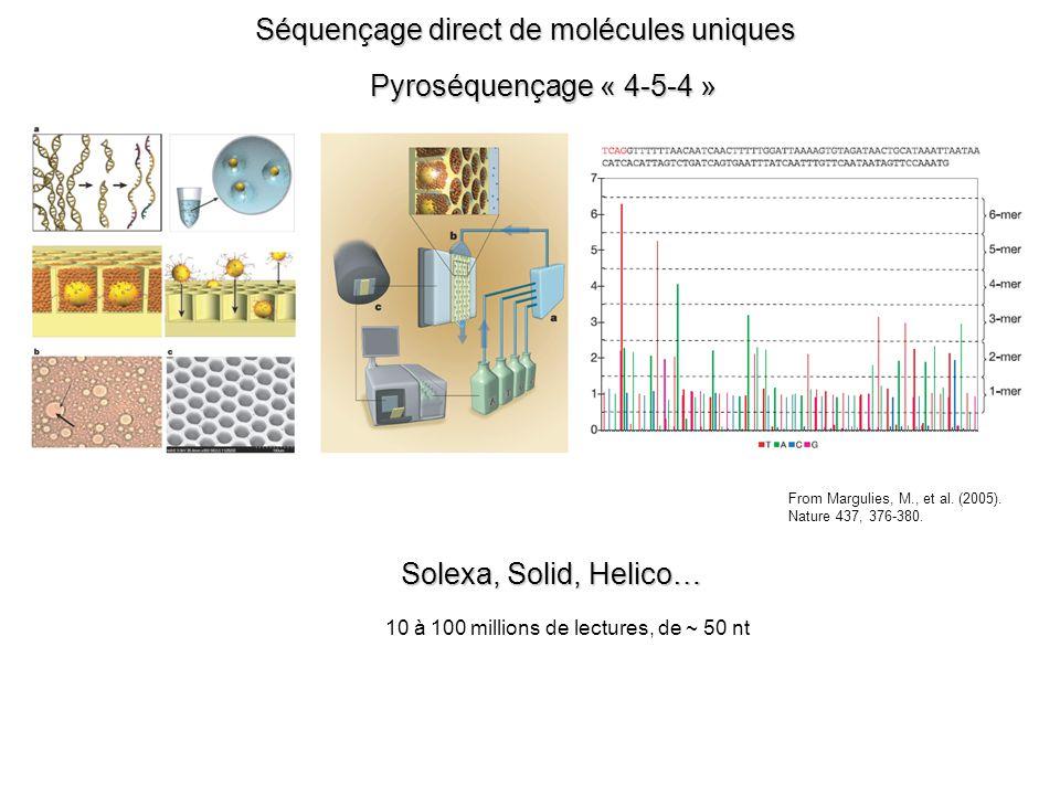 Séquençage direct de molécules uniques