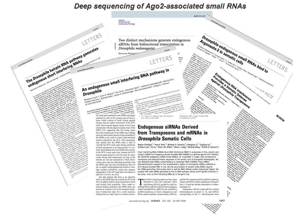 Deep sequencing of Ago2-associated small RNAs