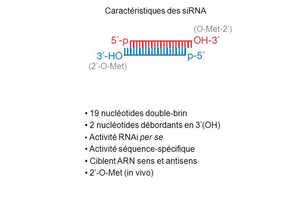 Caractéristiques des siRNA