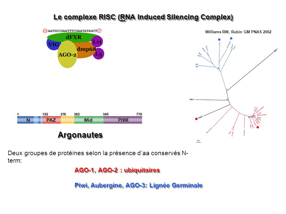 Le complexe RISC (RNA Induced Silencing Complex)