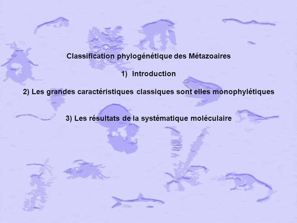 Classification phylogénétique des Métazoaires Introduction