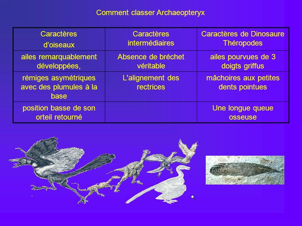 Comment classer Archaeopteryx Caractères d'oiseaux