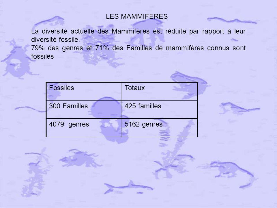 LES MAMMIFERES La diversité actuelle des Mammifères est réduite par rapport à leur diversité fossile.