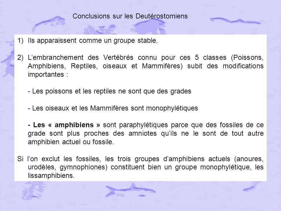 Conclusions sur les Deutérostomiens
