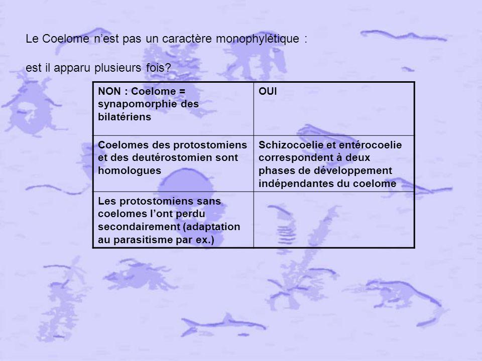 Le Coelome n'est pas un caractère monophylétique :