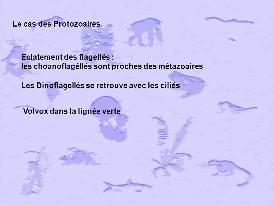 Le cas des Protozoaires