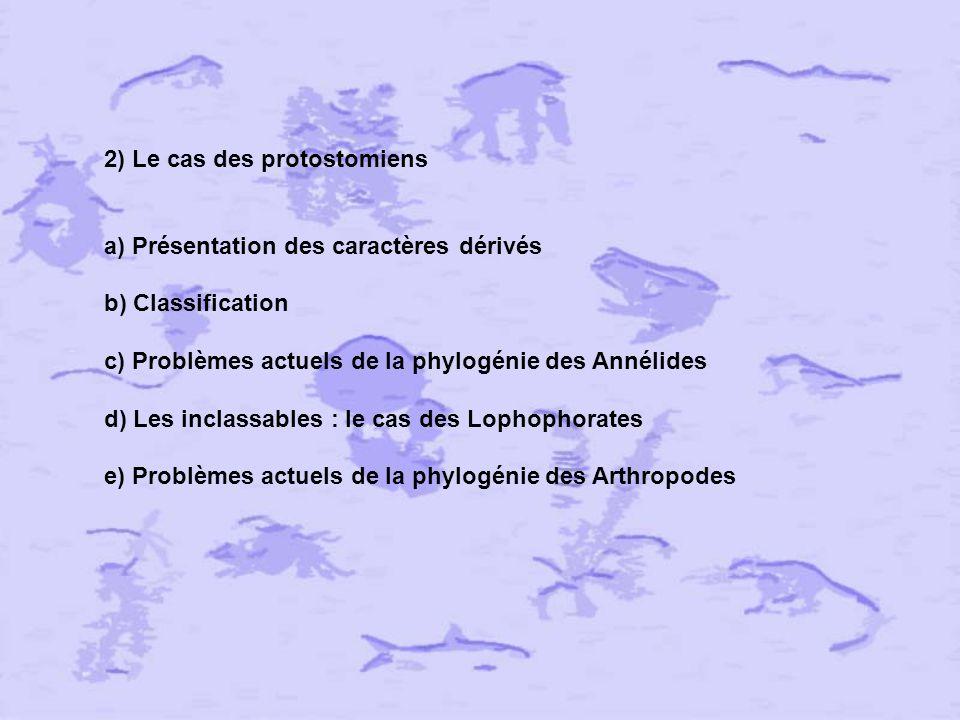 2) Le cas des protostomiens