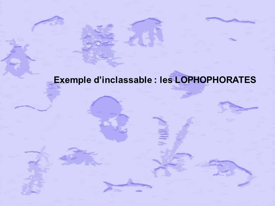 Exemple d'inclassable : les LOPHOPHORATES