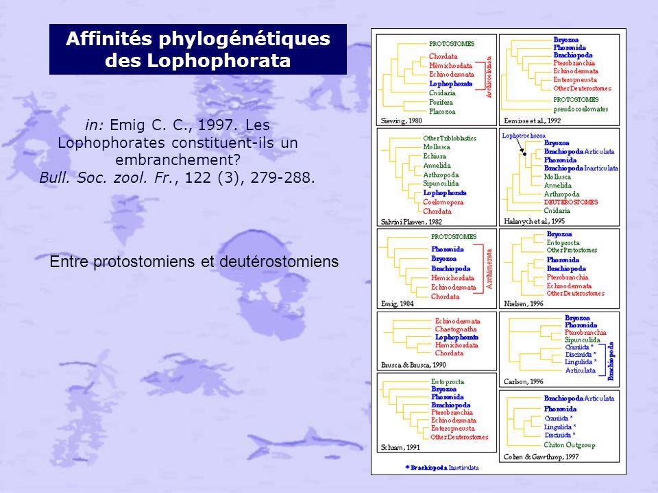 Affinités phylogénétiques des Lophophorata