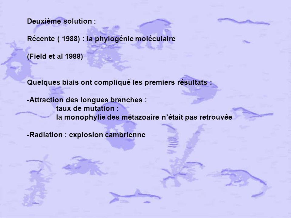 Deuxième solution : Récente ( 1988) : la phylogénie moléculaire. (Field et al 1988) Quelques biais ont compliqué les premiers résultats :