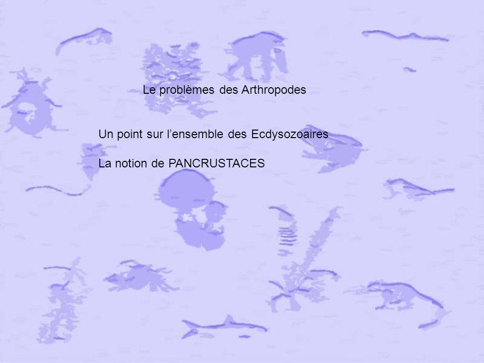 Le problèmes des Arthropodes