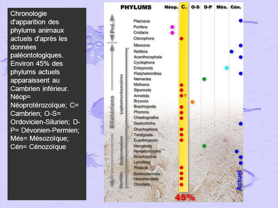 Chronologie d apparition des phylums animaux actuels d après les données paléontologiques.