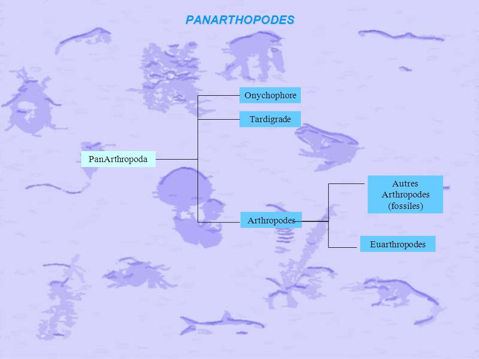 Autres Arthropodes (fossiles)