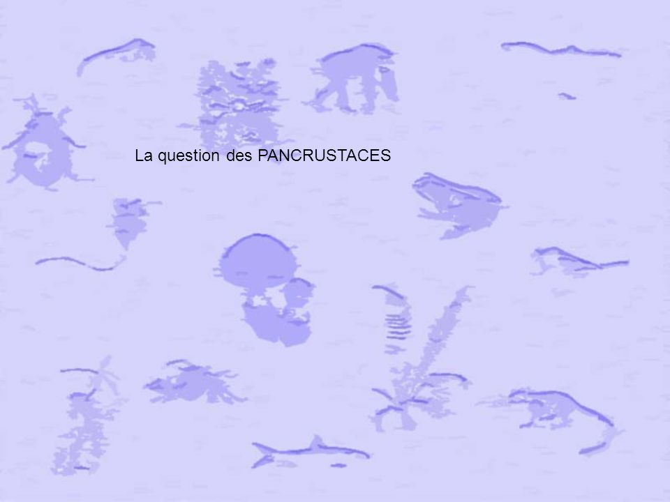La question des PANCRUSTACES