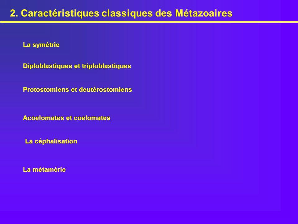 2. Caractéristiques classiques des Métazoaires