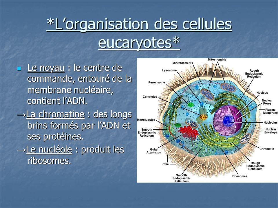 *L'organisation des cellules eucaryotes*