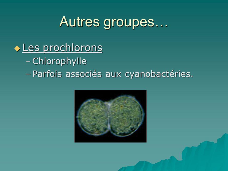 Autres groupes… Les prochlorons Chlorophylle