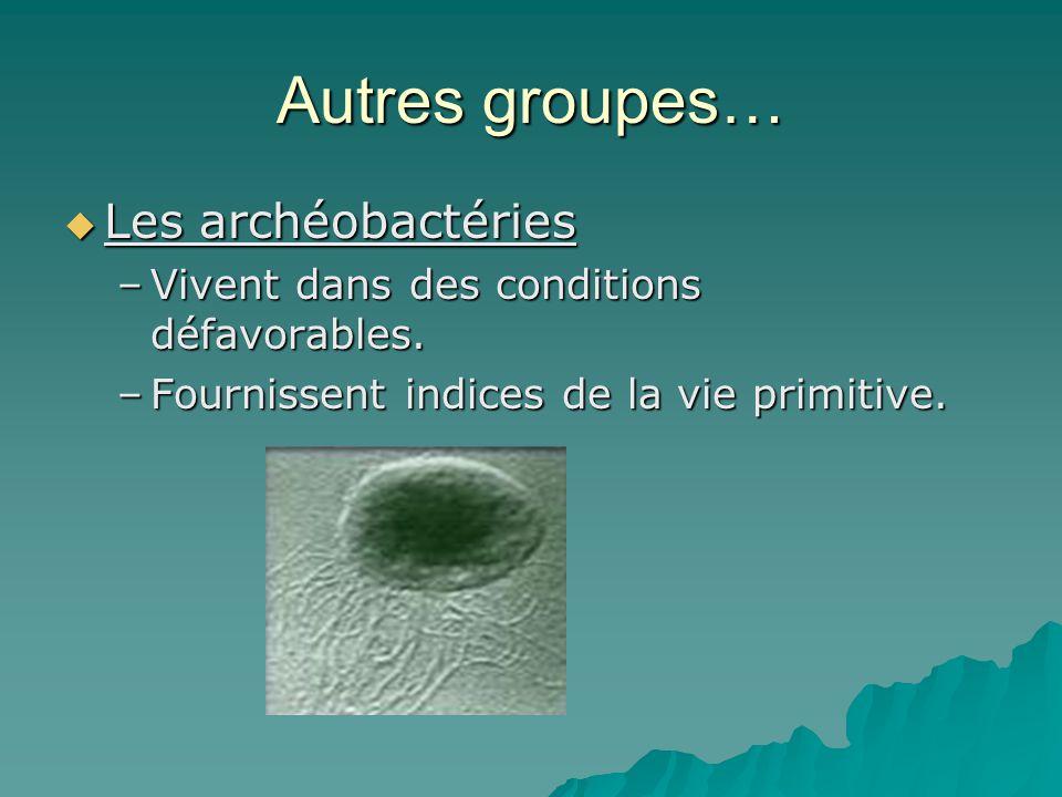 Autres groupes… Les archéobactéries
