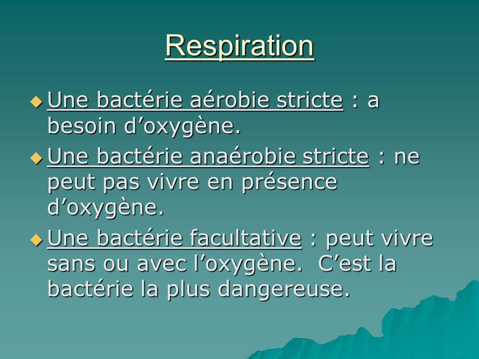 Respiration Une bactérie aérobie stricte : a besoin d'oxygène.