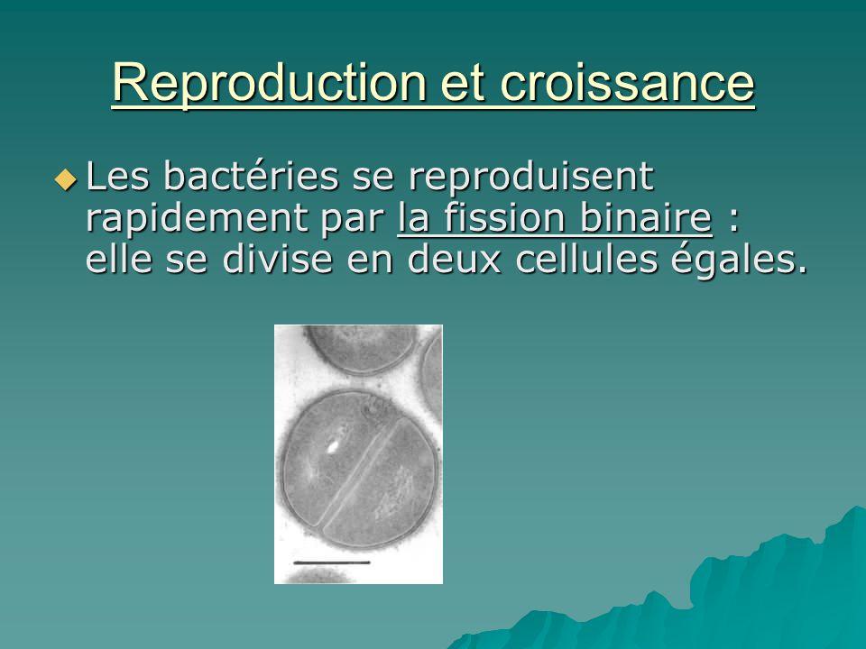 Reproduction et croissance
