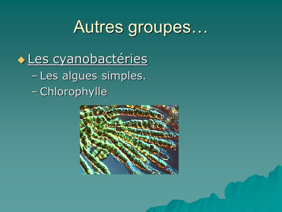Autres groupes… Les cyanobactéries Les algues simples. Chlorophylle
