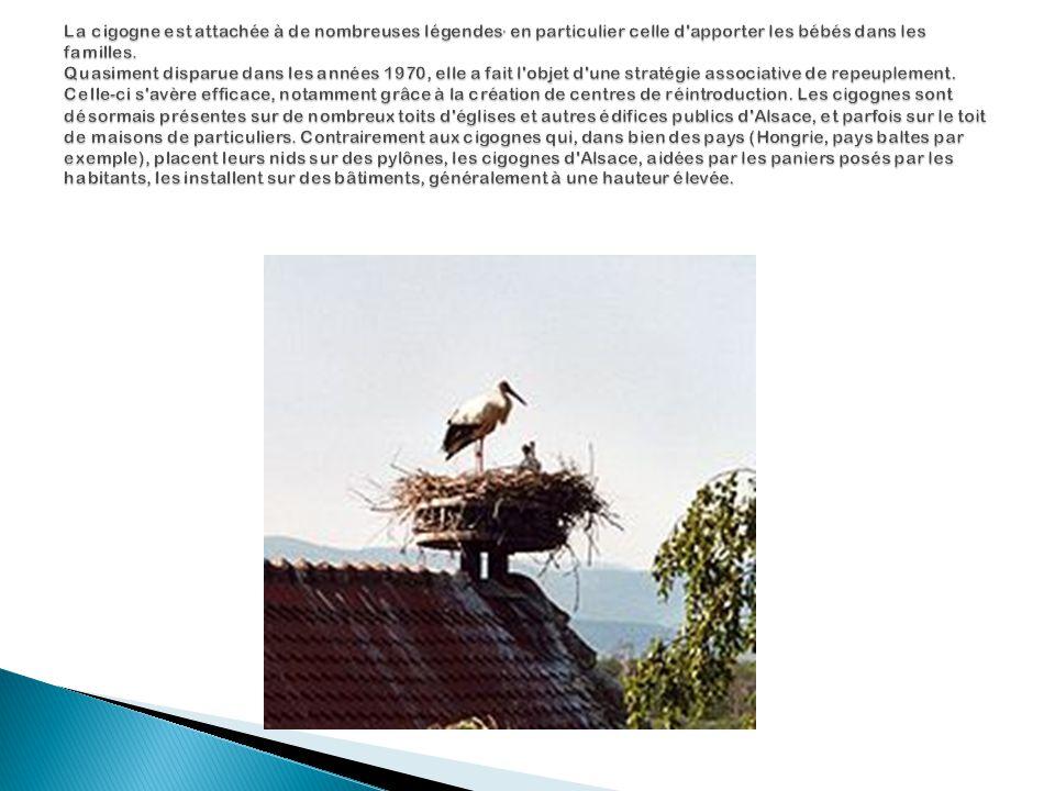 La cigogne est attachée à de nombreuses légendes, en particulier celle d apporter les bébés dans les familles.