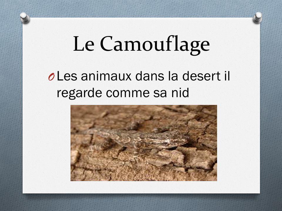 Le Camouflage Les animaux dans la desert il regarde comme sa nid