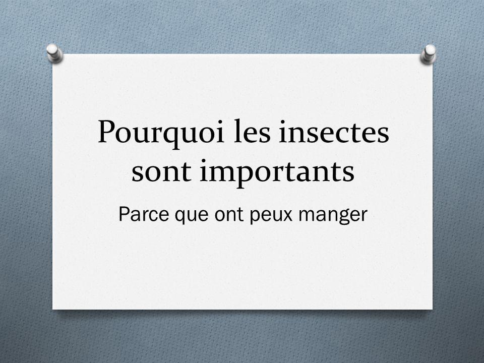 Pourquoi les insectes sont importants