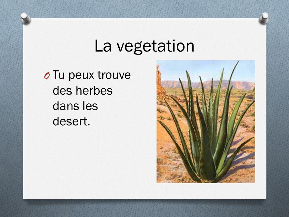 La vegetation Tu peux trouve des herbes dans les desert.