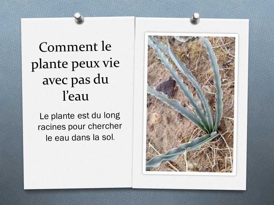 Comment le plante peux vie avec pas du l'eau