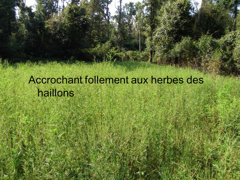 Accrochant follement aux herbes des haillons