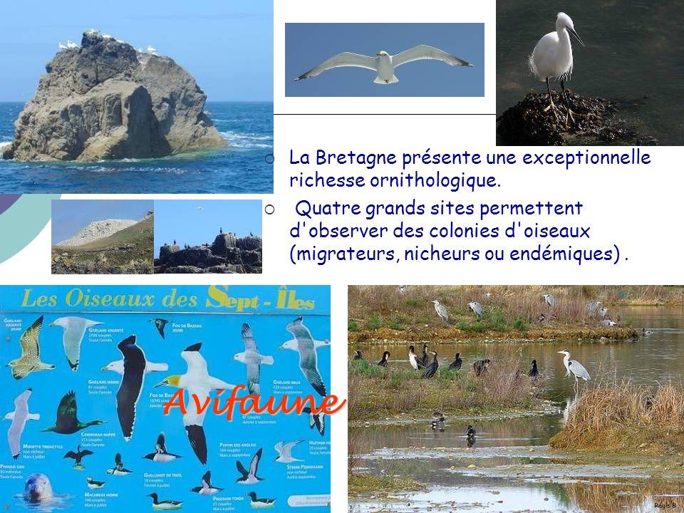 La Bretagne présente une exceptionnelle richesse ornithologique.