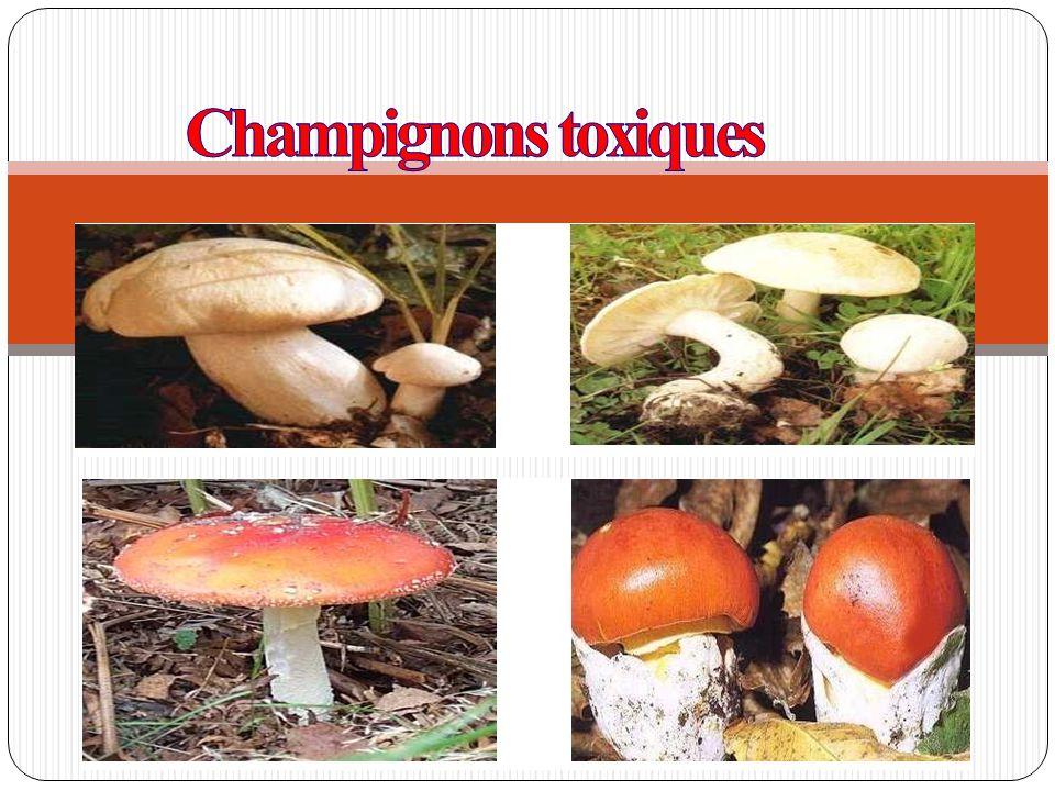 Champignons toxiques